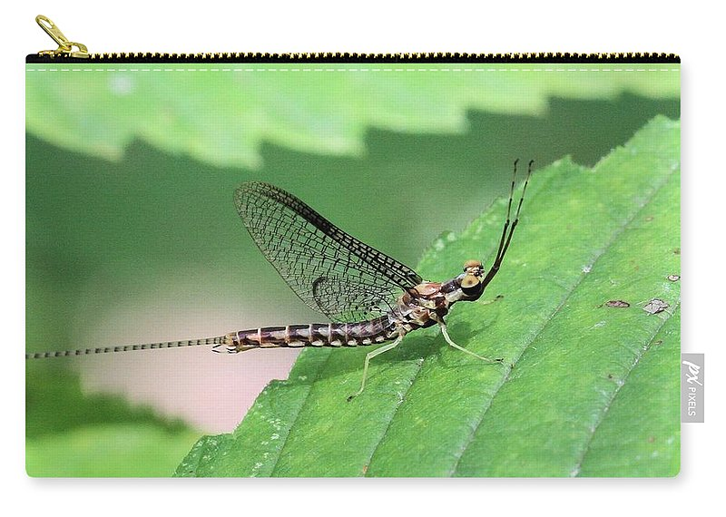 Mayfly Carry-all Pouch featuring the photograph Mayfly by Doris Potter