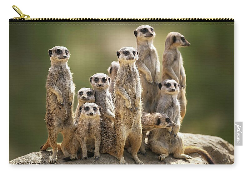 Scenics Carry-all Pouch featuring the photograph Meerkat Family On Lookout by Kristianbell