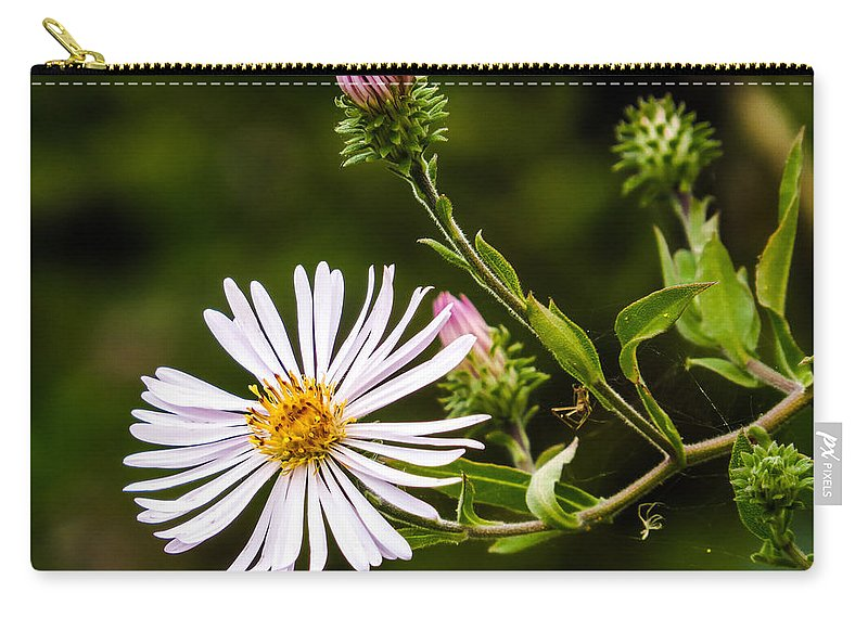 Michaelmas Daisy Carry-all Pouch featuring the photograph Michaelmas Daisy by Zina Stromberg