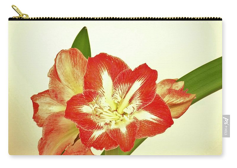 Minerva Carry-all Pouch featuring the photograph Minerva 2 by Scenic Sights By Tara