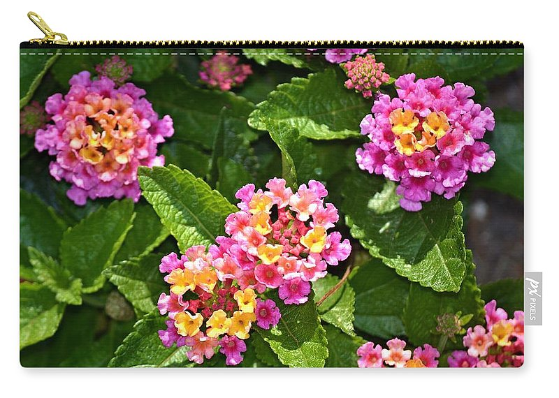 Mini Carry-all Pouch featuring the photograph Mini Flowers by Tara Potts