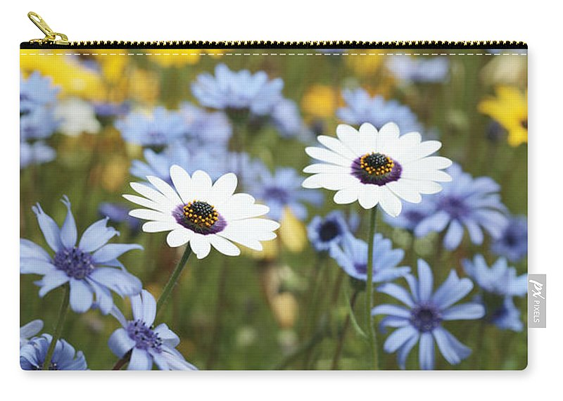 African Daisy Carry-all Pouch featuring the photograph Mixed Daisies by Neil Overy