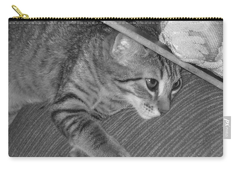 Kitten Carry-all Pouch featuring the photograph Model Kitten by Pharris Art