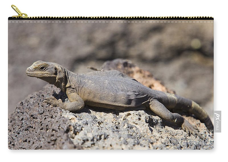 Mojave Carry-all Pouch featuring the photograph Mojave Desert Chuckwalla by B Christopher