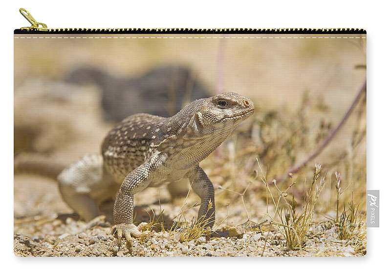 Mojave Desert Iguana Carry-all Pouch featuring the photograph Mojave Desert Iguana by B Christopher