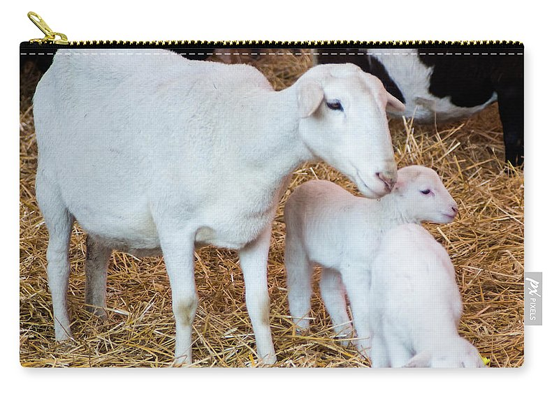 Mother Carry-all Pouch featuring the photograph Momma And Newborns by Photographic Arts And Design Studio