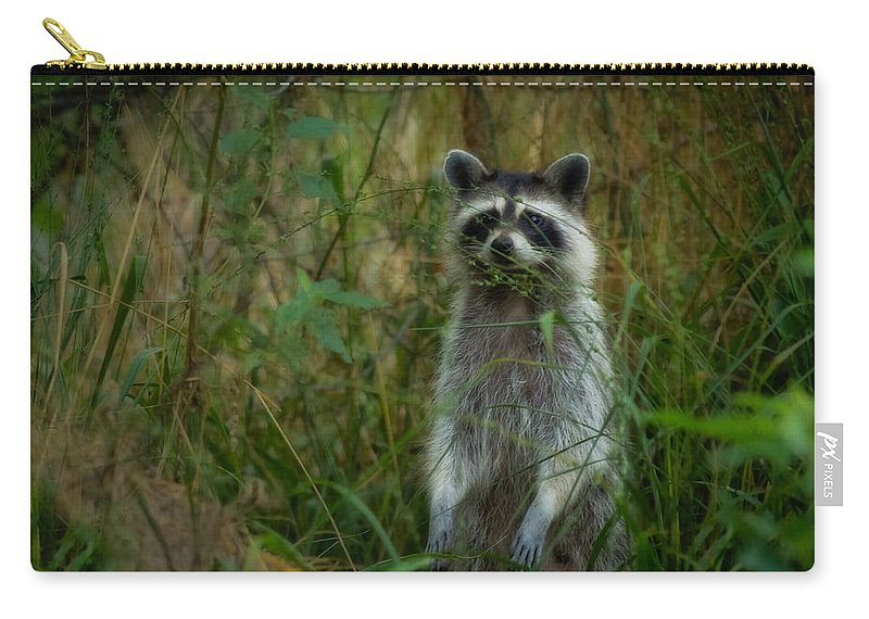 Momma Raccoon Carry-all Pouch featuring the photograph Momma Coon by Kim Henderson