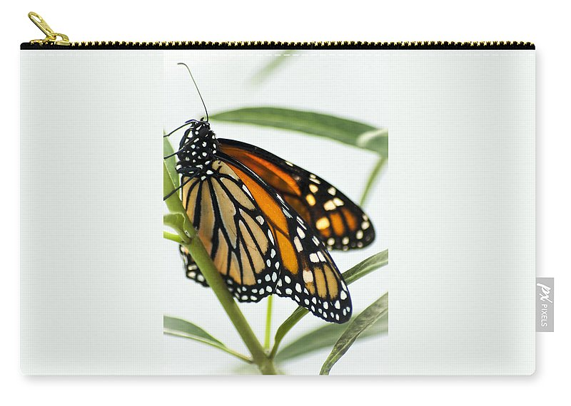 Butterfly Carry-all Pouch featuring the photograph Monarch Beauty by Carolyn Marshall
