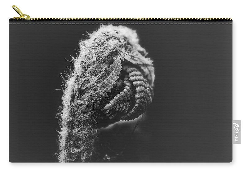 Fern Carry-all Pouch featuring the photograph Monday Morning by Susan Capuano