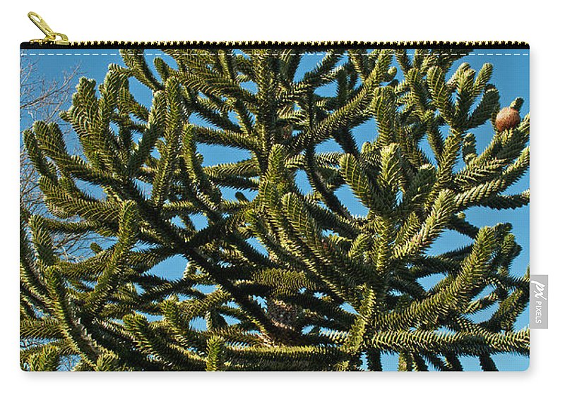Green Carry-all Pouch featuring the photograph Monkey Puzzle Tree E by Tikvah's Hope