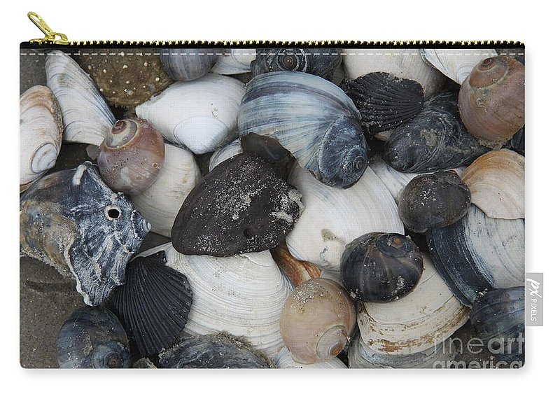 Moon Snails Carry-all Pouch featuring the photograph Moon Snails And Shells Still Life by Christiane Schulze Art And Photography