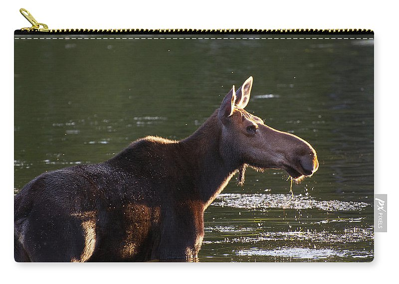 Moose Carry-all Pouch featuring the photograph Moose On Alert by Glenn Gordon