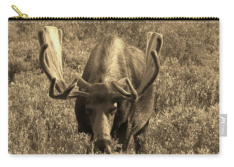 Moose Carry-all Pouch featuring the photograph Moose by Tonya Hance