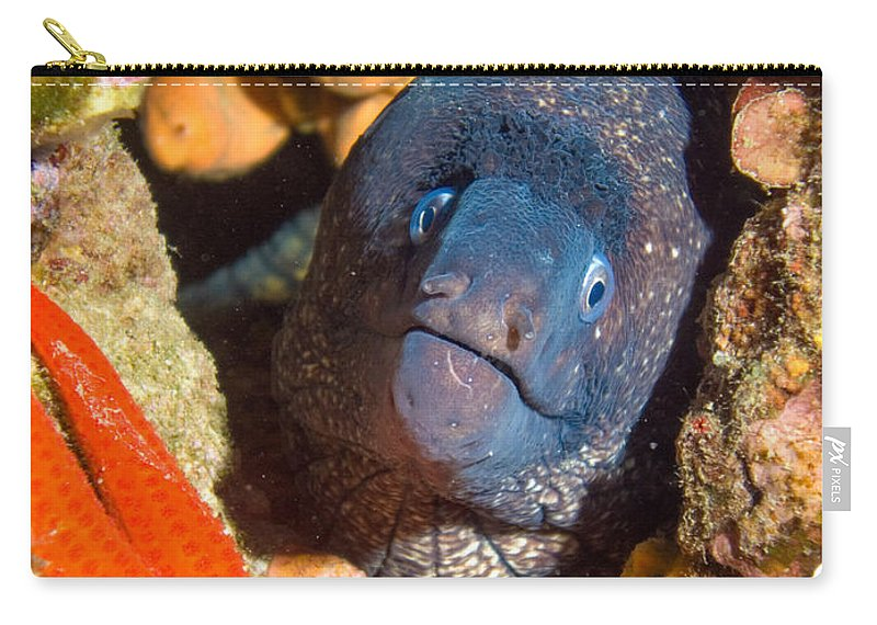 Mur�ne Carry-all Pouch featuring the photograph Moray And Starfish by Roy Pedersen