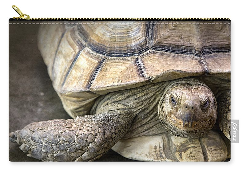 Tortoise Carry-all Pouch featuring the photograph Morla by Caitlyn Grasso