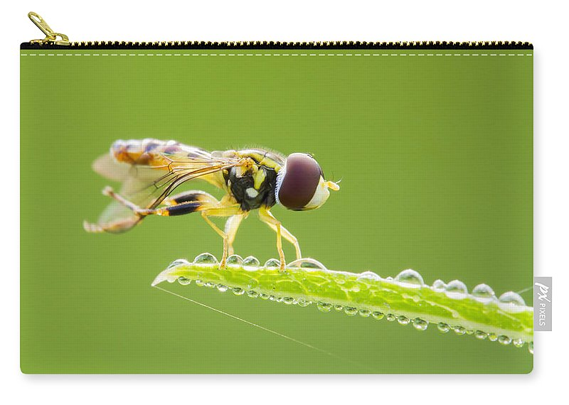 Background Carry-all Pouch featuring the photograph Morning Hoverfly by Mircea Costina Photography
