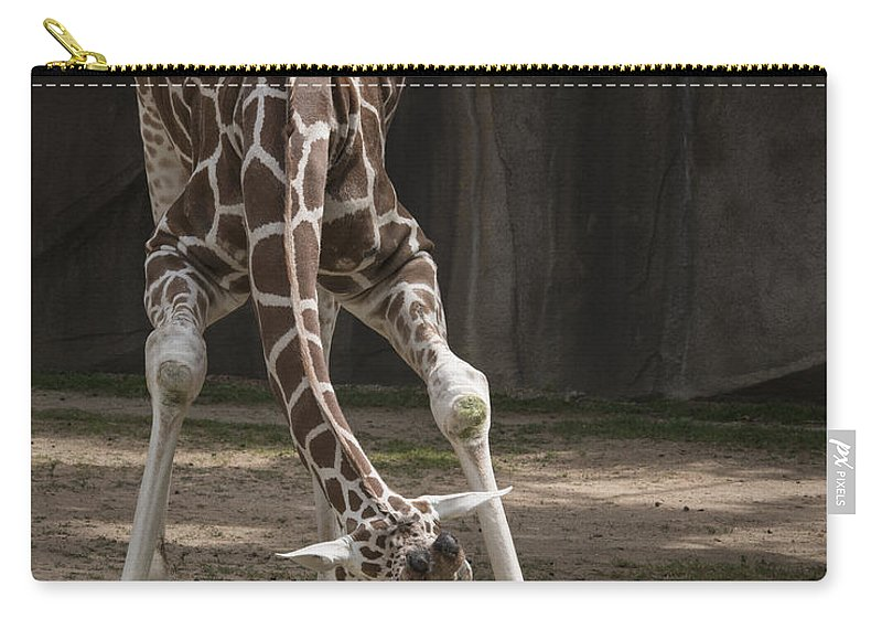 Giraffe Carry-all Pouch featuring the photograph Morning Stretch by Jayne Gohr