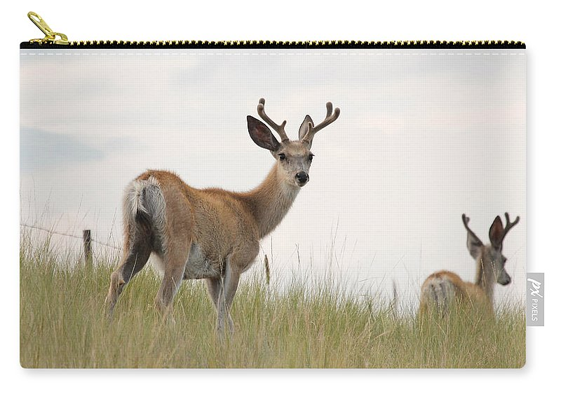 Deer Carry-all Pouch featuring the photograph Morning Stroll by Athena Mckinzie