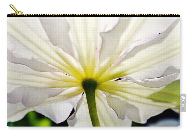 Clematis Carry-all Pouch featuring the photograph Morning Sun by Michelle Calkins