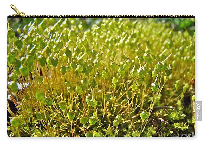 Moss Carry-all Pouch featuring the photograph Moss And Fruiting Bodies - Green Lane Pa by Mother Nature