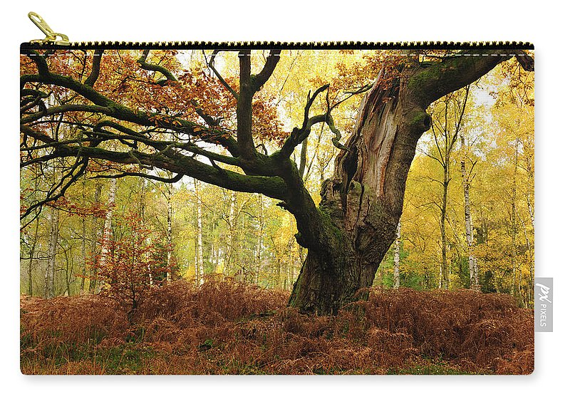 Aging Process Carry-all Pouch featuring the photograph Moss Covered Ancient Hollow Oak Tree In by Avtg