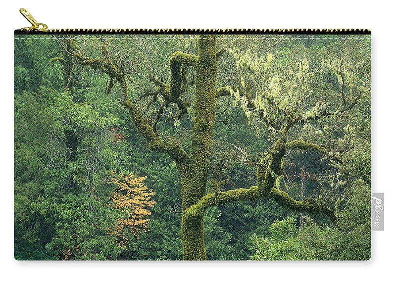 North America Carry-all Pouch featuring the photograph Moss Covered Tree Central California by Dave Welling