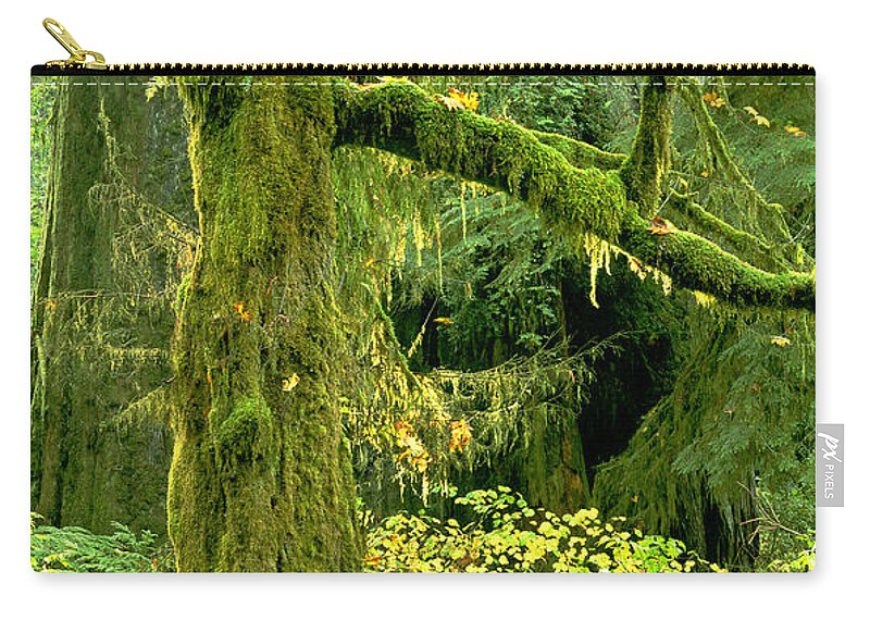 Big Leaf Maple Carry-all Pouch featuring the photograph Moss Draped Big Leaf Maple California by Dave Welling