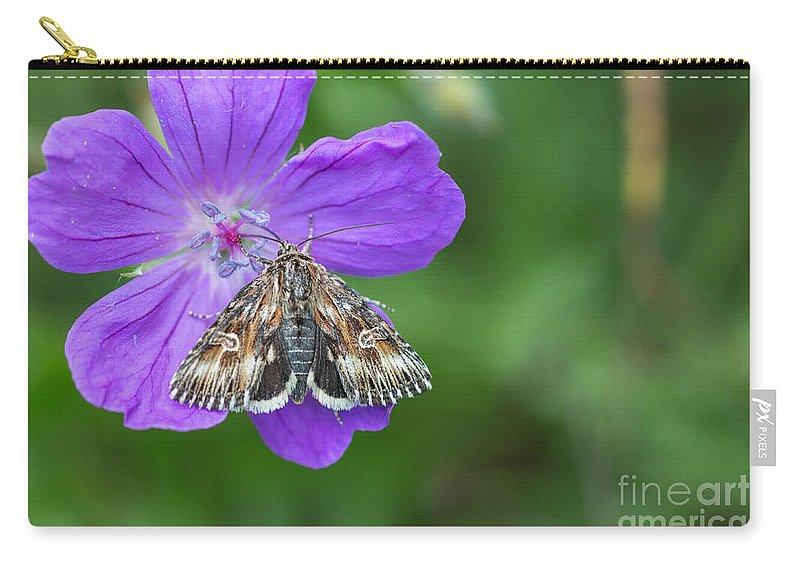 Actinotia Radiosa Carry-all Pouch featuring the photograph Moth Feeding On Geranium Sanguineum by Jivko Nakev