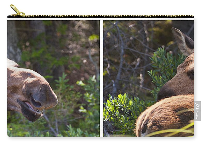 Moose Carry-all Pouch featuring the photograph Mother And Baby Moose by Glenn Gordon