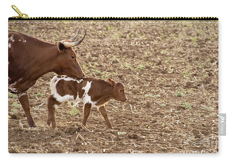 Long Horn Cattle Carry-all Pouch featuring the photograph Mother And Child V5 by Douglas Barnard