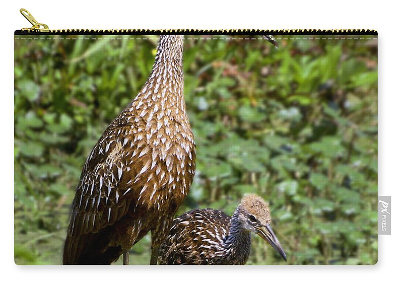 Limpkin Carry-all Pouch featuring the photograph Mother Limpkin And Colt by Barbara Bowen