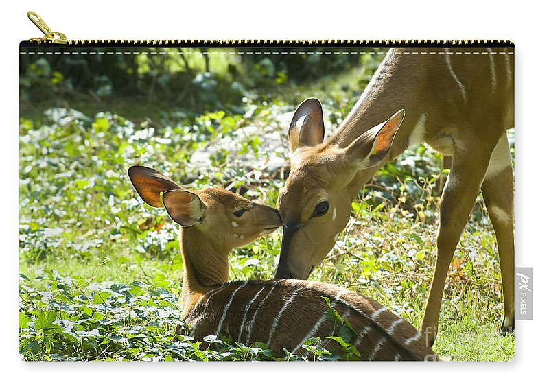 Deer Carry-all Pouch featuring the photograph Motherly Love by Anthony Sacco