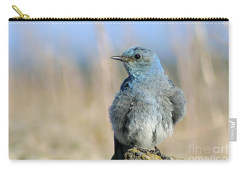 Animal Carry-all Pouch featuring the photograph Mountain Bluebird by Teresa Zieba