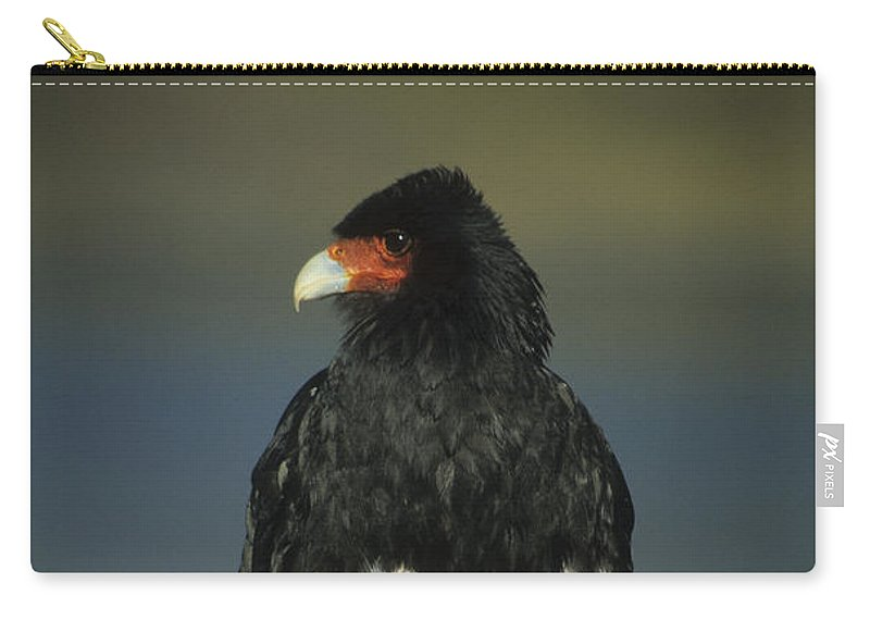 Bird Carry-all Pouch featuring the photograph Mountain Caracara by James Brunker
