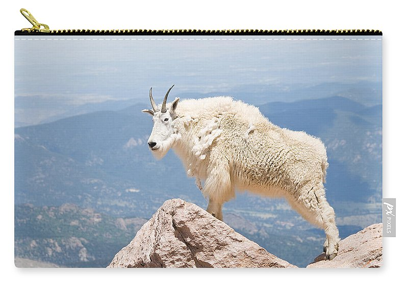 Mountain Goat Carry-all Pouch featuring the photograph Mountain Goat Up High by Jaci Harmsen