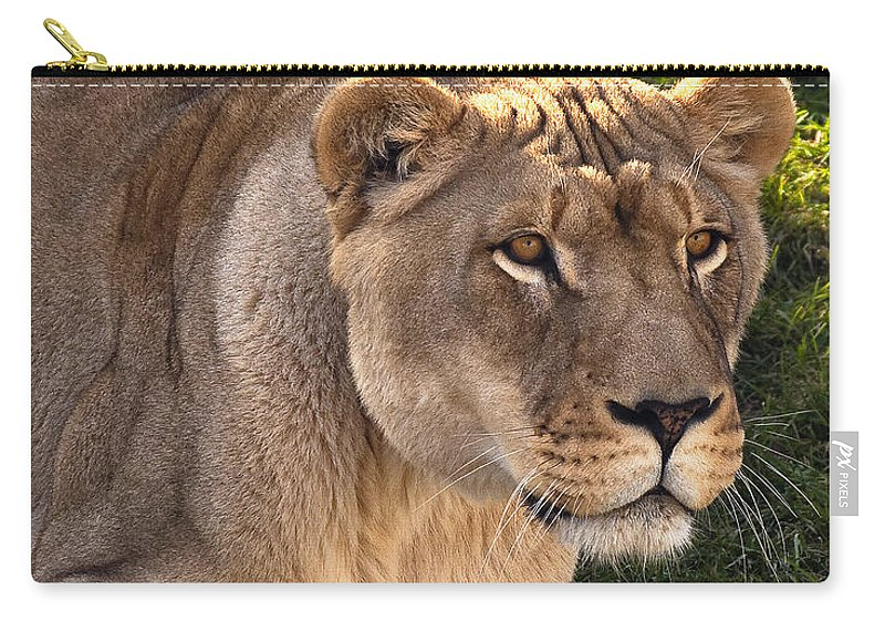 Lion Carry-all Pouch featuring the photograph Moving In by Steve Harrington