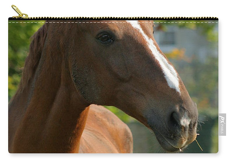 Horse Carry-all Pouch featuring the photograph Mr Handsome by Angel Tarantella
