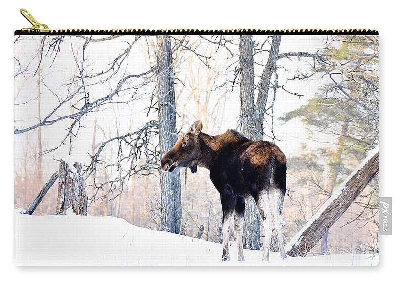 Moose Carry-all Pouch featuring the photograph Mr. Moose by Cheryl Baxter