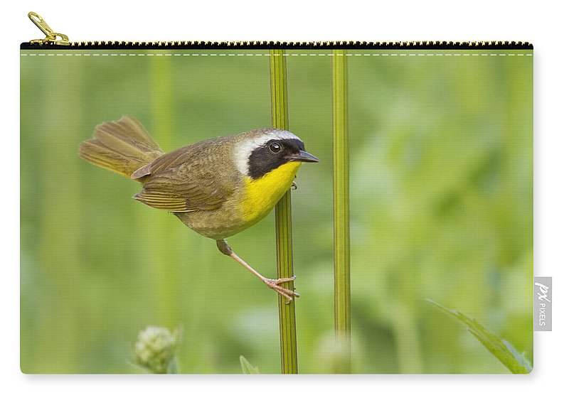 Warblers Carry-all Pouch featuring the photograph Mr Yellowthroat by Mircea Costina Photography