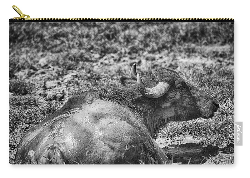 Water Buffalo Carry-all Pouch featuring the photograph Mudbath-black And White by Douglas Barnard