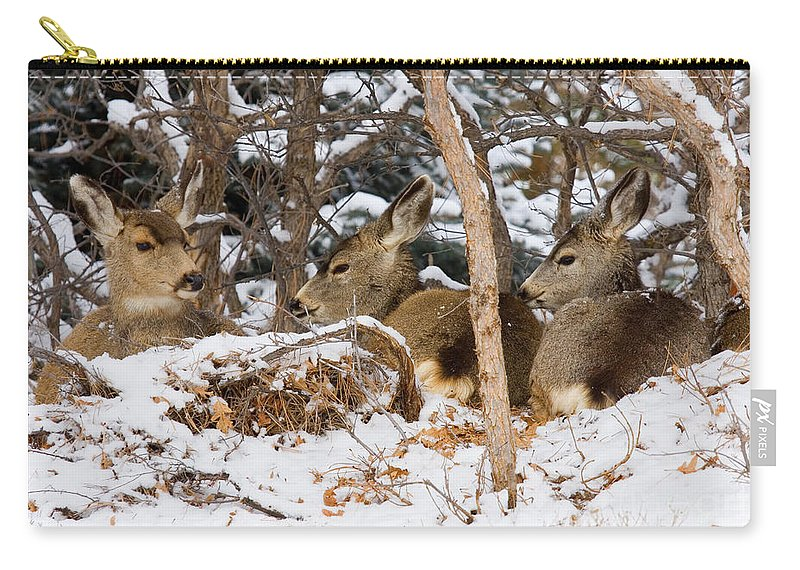 Mule Deer Carry-all Pouch featuring the photograph Mule Deer In Snow by Steve Krull