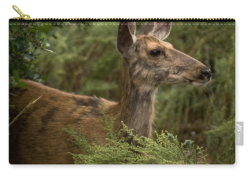 Deer Carry-all Pouch featuring the photograph Mule Deer On Alert by Ernie Echols