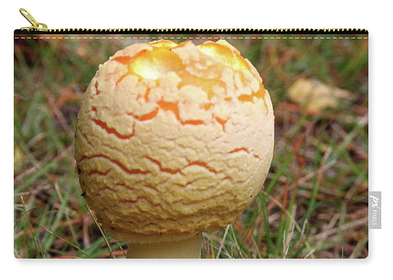 Mushroom Carry-all Pouch featuring the photograph Mushroom by Christiane Schulze Art And Photography