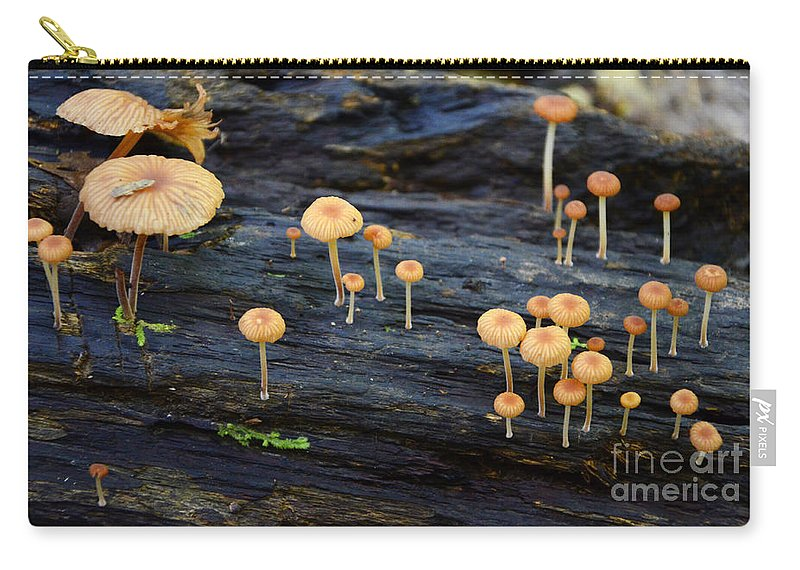 Mushrooms Carry-all Pouch featuring the photograph Mushrooms Amazon Jungle Brazil 4 by Bob Christopher