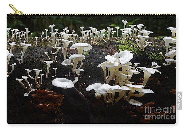 Mushrooms Carry-all Pouch featuring the photograph Mushrooms Amazon Jungle Brazil 5 by Bob Christopher