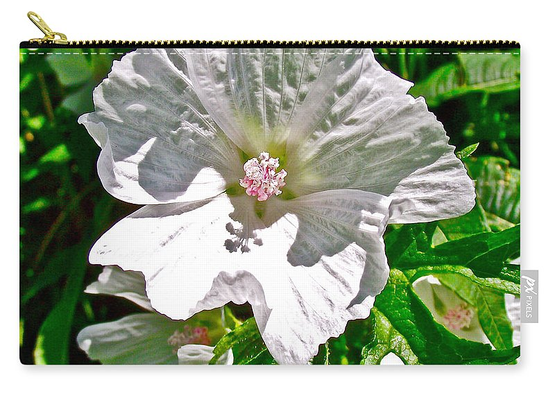 Musk Mallow Along Trail To Cap Gaspe In Forillon National Park Carry-all Pouch featuring the photograph Musk Mallow Along Trail To Cap Gaspe In Forillon National Park-quebec by Ruth Hager