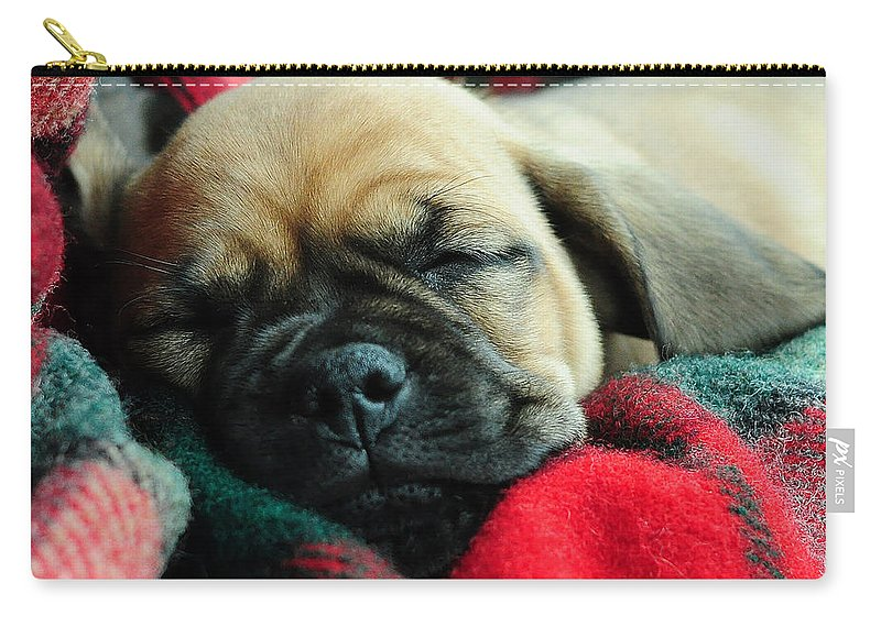 Nap Time Carry-all Pouch featuring the photograph Nap Time by Lisa Phillips