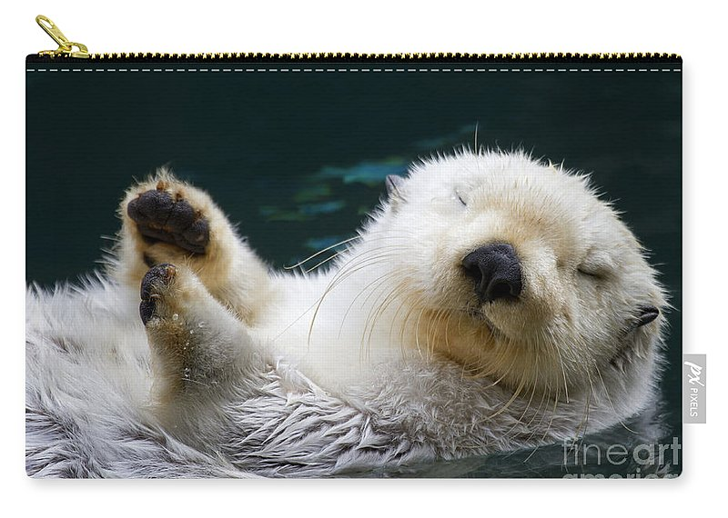 Otter Carry-all Pouch featuring the photograph Napping On The Water by Mike Dawson