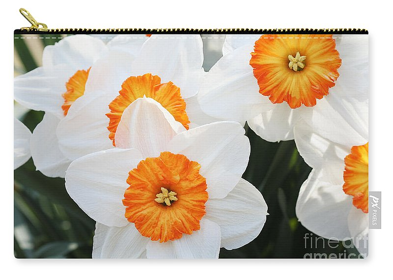 Narcissus Parkdene Carry-all Pouch featuring the photograph Narcissus Parkdene #2 by Judy Whitton
