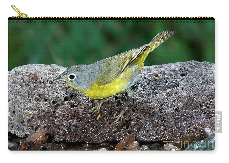 Fauna Carry-all Pouch featuring the photograph Nashville Warbler Vermivora Ruficapilla by Anthony Mercieca